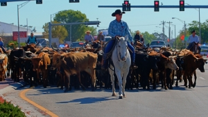Immokalee Cattle Drive and Jamboree_Courtesy Don Columbus Photography