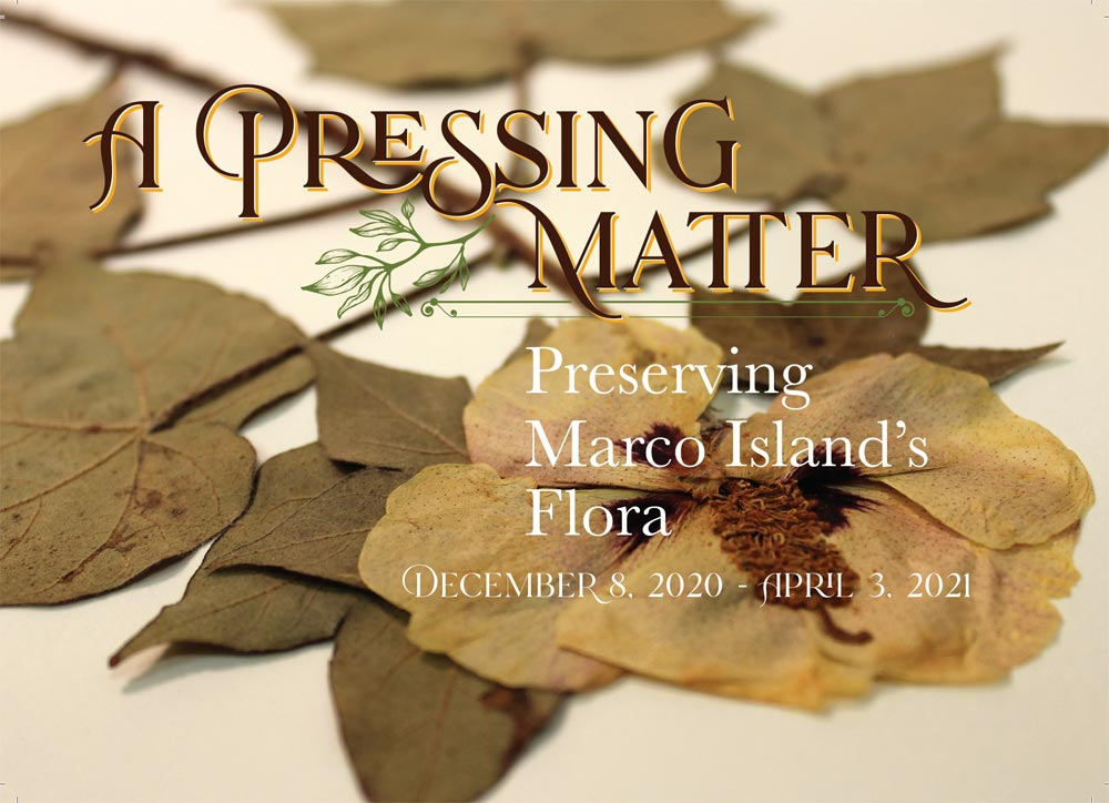 Pressed Flower with title of exhibit: A Pressing Matter, Preserving Marco Island's Flora