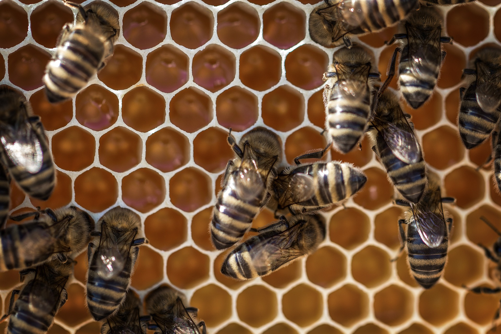 Photo of honeycomb with bees on it