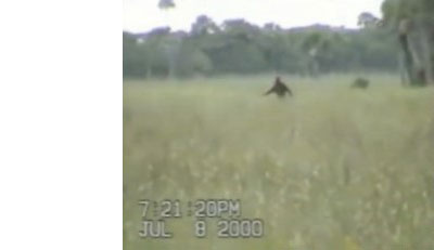 Blurry photo of a field with a brown figure running in the distance
